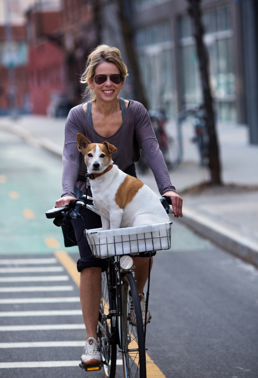 brooklyn bikes and dogs